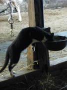 Thirsty cat!