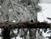 Wild Winter Birdie