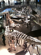 Dinosaur Exhibit at Natural History Museum in Expo Park