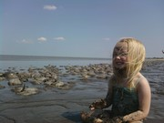 immersed in horseshoe crabs