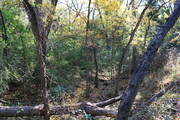 Forested Ravine