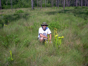 Steve in the Green Swamp with Pitcher Plants!