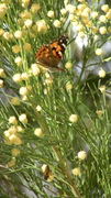Butterfly and bee busy