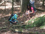 Studying nature's recyclers in the forest