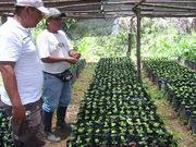 Manejo vivero de café orgánico en la CAC Divisoria Comité San Isidro 2008