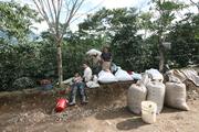 Familia recolectando el café en la Finca