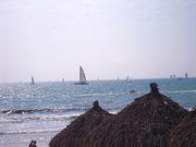 Sail boats on the bay