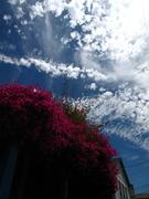 berkeley sky