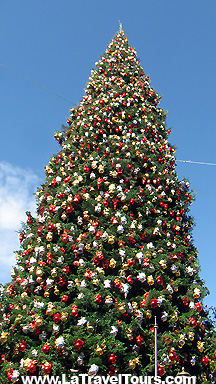 The Grove Biggest Tree on Holiday Tour