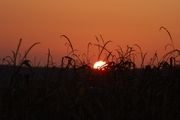 Izzó naplemente