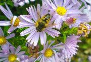 Virág, méhecskével