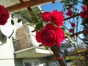 virágom 012