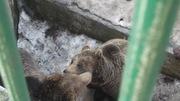 Maci-puszi a marosvásárhelyi állatkertben