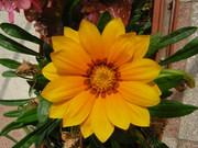 Virágaim - 2012. 005