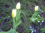 április 004