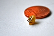 5 mm kis csiga