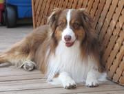 Mon chien Max!!