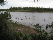 Waterfowl Hunting 2011