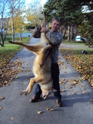 1st Coyote of the year 46.5l b