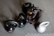 Badass Kitty