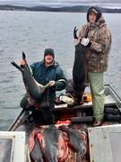 Support The Seal Hunt