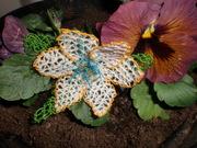 A new Oya Flower..