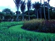 jardin-botanico_12
