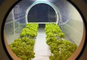 Agricultura espacial