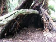 Debri shelter