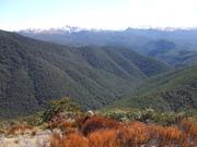 Mount Athur tramp.