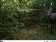 Czech wildlife/bushcraft
