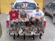 Bird Hunting 17