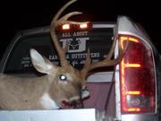 Deer Hunting 10