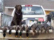 Bird Hunting 22