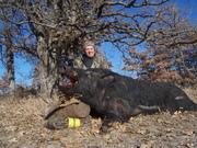 Almost Bullet Proof Boar