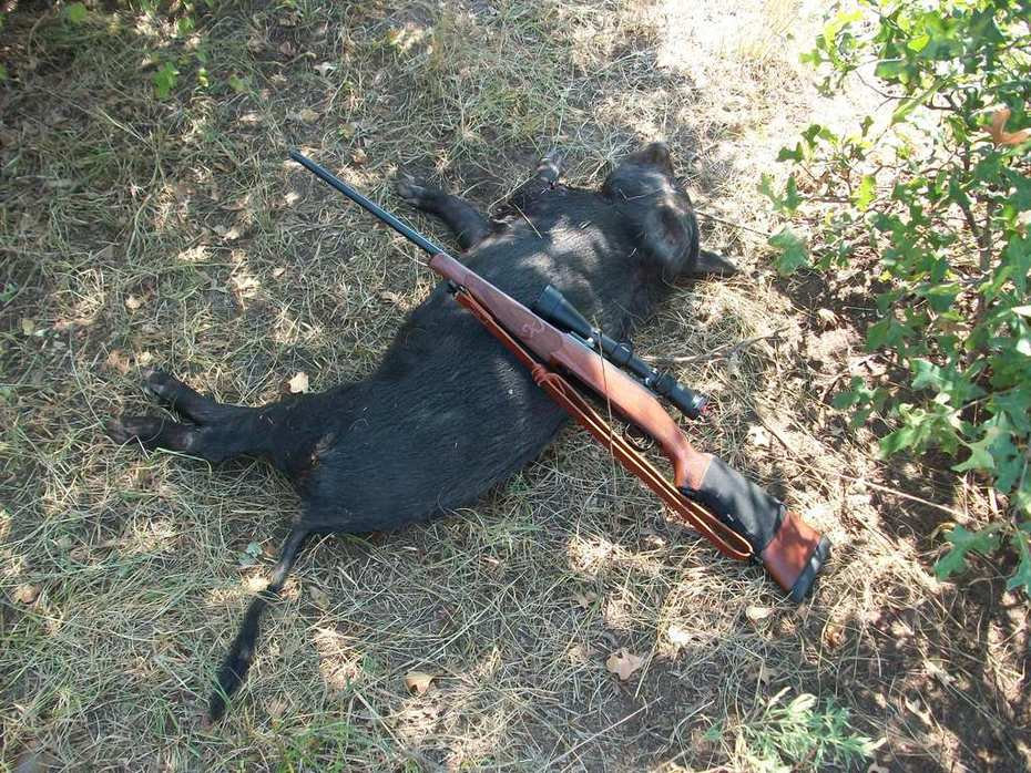 hog #2