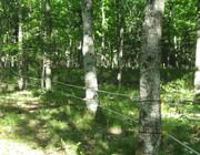 Treeline 2 -insulators with 2 lines polytape