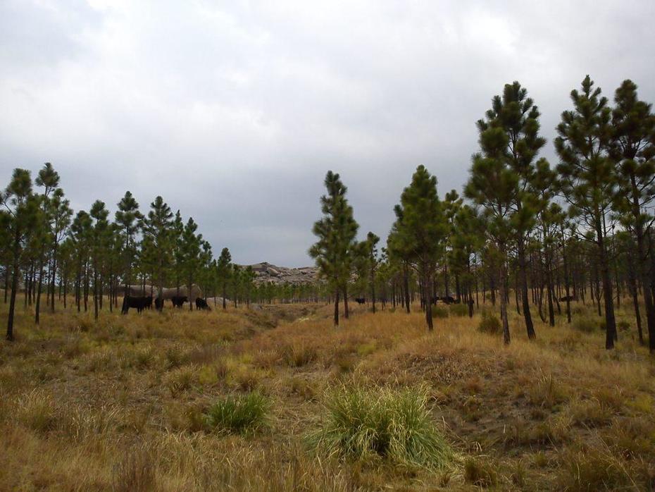 Estancia Rincon Grande SP - Argentina