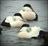 Salt Water Duck Hunting