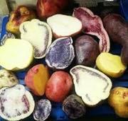 Producción limpia de papa, granos y tubérculos  andinos.