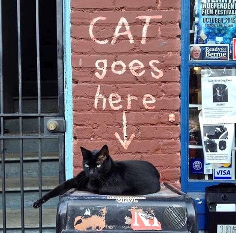 Black cat lying down under a sign painted on the wall, 'CAT goes here.'