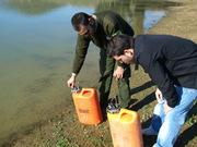 Suelta de 6000 tencas en la charca parrala y el estanque.