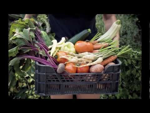 Organic Food Music Video