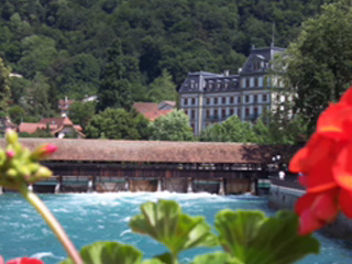 Swiss Flowers: in the words & pictures of Untourists