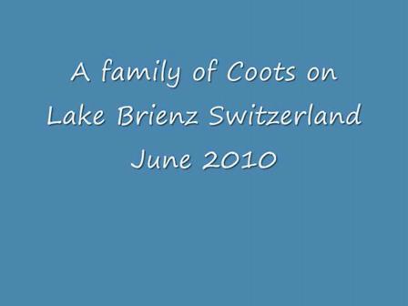 2010 Brienz Coots