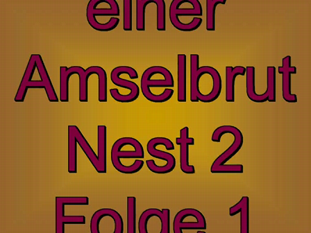 Amselbrut Folge1