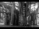 Tree Rain.2007
