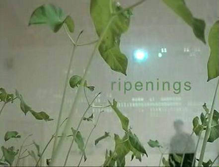 ripenings_08