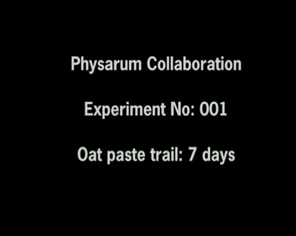 Physarum Experiments 001-006