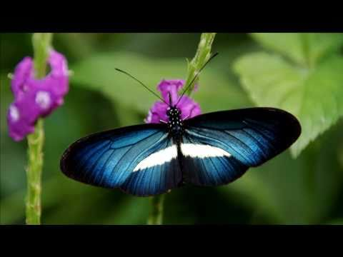 Billiantly Beautiful Butterflies